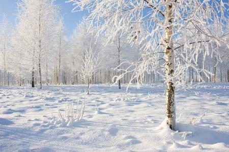 Frozen tree on winter field and blue sky Stock Photo - 9439373
