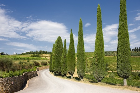 A typical landscape of Tuscany Фото со стока
