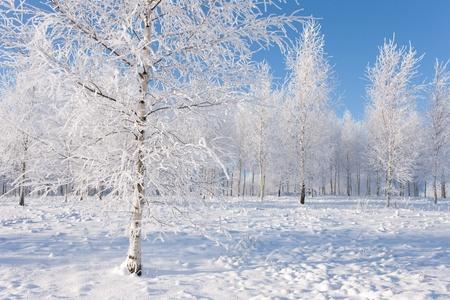 Frozen tree on winter field and blue sky Stock Photo - 9674350