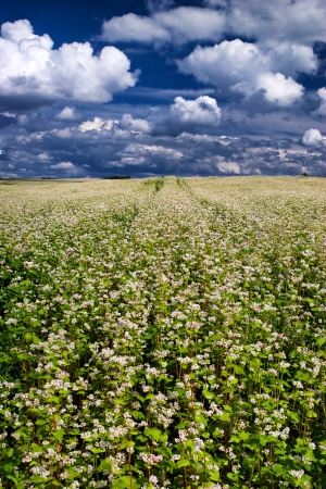A field of flowers to the horizon on a summer day Stock Photo