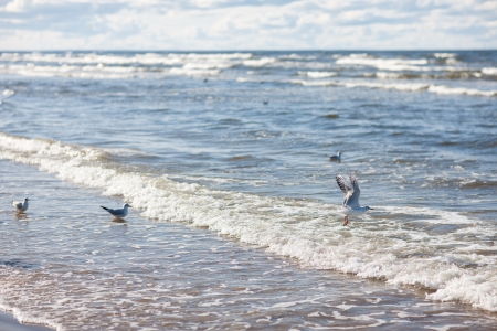 Seagulls and surf on the Baltic Sea photo