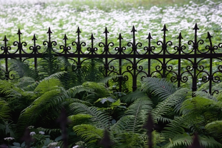 Fence overgrown with grass  Vintage Stock Photo - 17204663