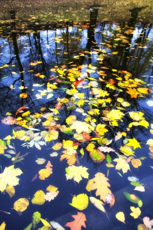 Autumn leaves in water on a background of trees