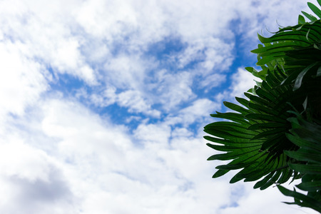 Green leaves of artificial palm trees on a background of clouds in the blue sky. Stock Photo