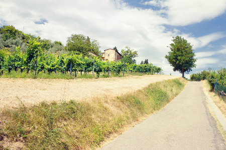 orcia: Landscape of vineyards near the road in the summer of Tuscany. Italy