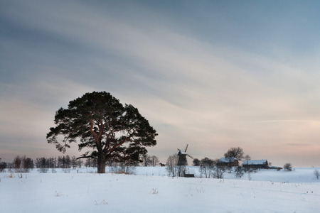 Winter rural landscape with pine trees and mill and farmhouses. Latvia