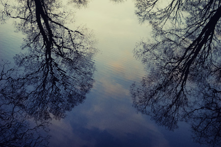 Reflection of trees in water with ripples of waves in the spring at sunset Stock Photo