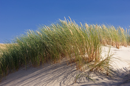 bl: Green grass in the dunes on a background of blue sky. Latvia. Baltic sea