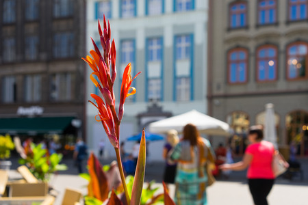 Summer flowers in the square in the old town, Riga. Vecriga, Latvia