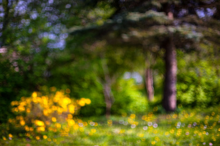 A bush of yellow flowers in green plants and pine forest on a sunny day. Blurry Stock Photo