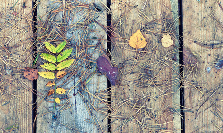 pine needles: Pine needles and yellow leaves on wooden boards in autumn
