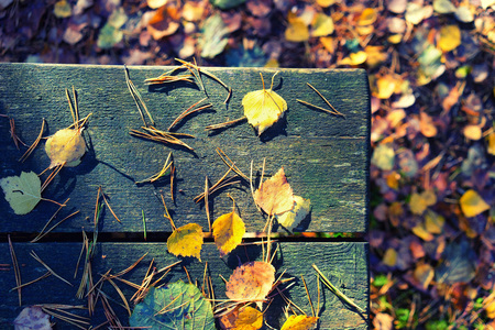 Autumn leaves and needles lay day at the edge of a bench in a forest in November Stock Photo