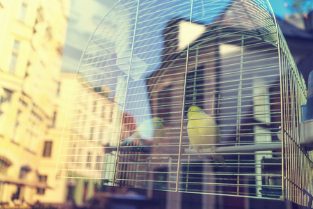rejas de hierro: Two yellow canary in a cage of iron bars outside the window with a reflection of the old town of Riga Building on a sunny day Foto de archivo