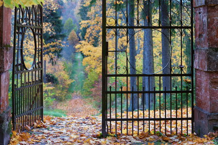 Maple leaves lie in the ancient gate to the alley in the old park with yellow trees and fir trees Фото со стока