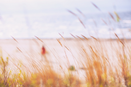 The sky, the sea and the waves through the grass on the beach