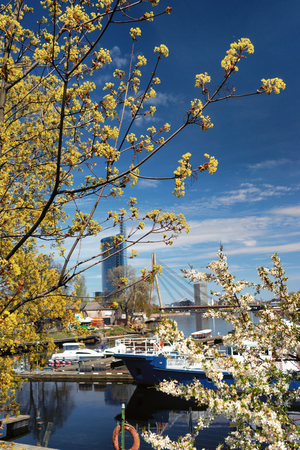 Port ships in Riga through flowering trees on the background of bridge and skyscraper in the spring. Latvia Фото со стока