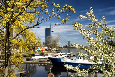 Port ships in Riga through flowering trees on the background of bridge and skyscraper in the spring