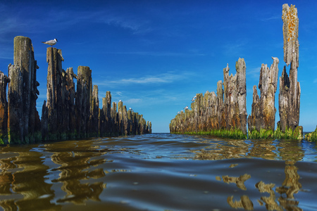 Piles of old wooden pier in the sea with perspective to the horizon under the blue sky and gulls