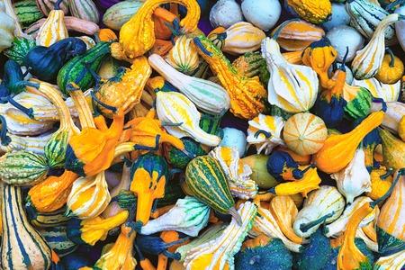 Pumpkins in different shapes and sizes, Diverse assortment of pumpkins, decorative pumpkins, pile of cute pumpkins in different colors at pumpkin patch in a local farm, seasonal display Фото со стока