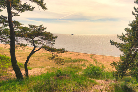 Yellow sand dunes with pine trees against the background of the Baltic waves on a sunny summer day