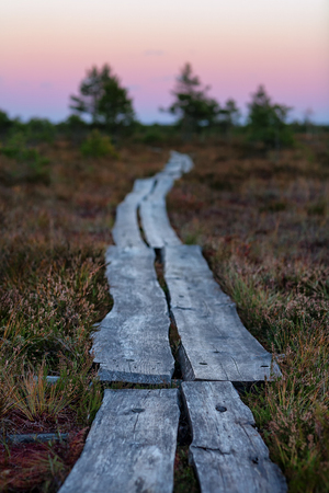 The path from the planks goes to the horizon in the marsh in sunset illumination