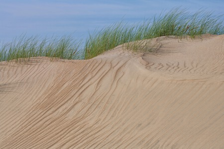 Green grass on the crest of the sand dune of the Baltic Sea in summer