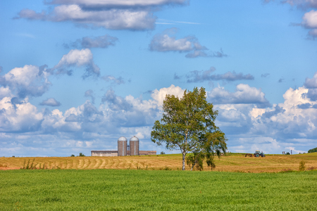 Tractor in a yellow field next to the grain storage on the background of a blue sky with clouds in the summer day of Latvia Stock Photo