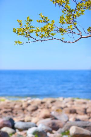 Дерево с зелеными листьями на ясном голубом небе над полосой моря и каменистым берегом весной Фото со стока