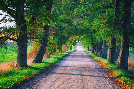 A dirt road in the alley of old oaks with a sunny autumn day Stock Photo
