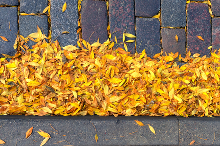 Yellow leaves on a stone street at the curb of the sidewalk in autumn Фото со стока