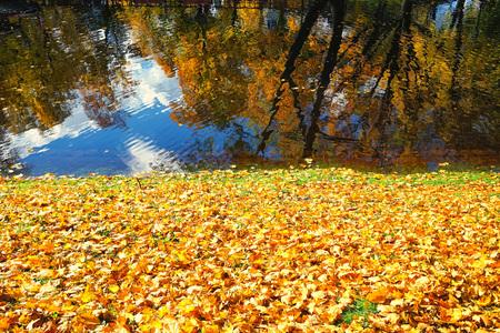 Красивые желтые деревья с оранжевыми листьями в городском парке в солнечный день