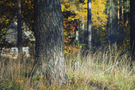 Tree in tall grass with yellow leaves against the background of autumn forest Фото со стока
