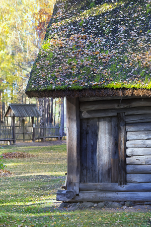 Thatched roof with yellow leaves on a wooden house in an autumn forest on a sunny day