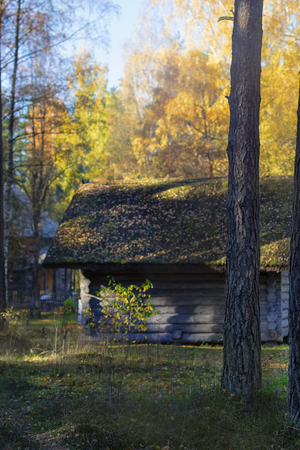 House of wooden logs in a spring pine forest on a sunny day with yellow leaves Фото со стока