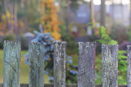 Old fence of boards with moss on a background of autumn forest