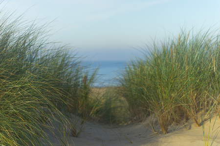 Green grass in the sandy yellow dunes of the Baltic Sea against the backdrop of the blue sea strip in autumn Фото со стока