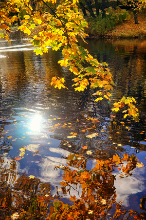Multicolored autumn leaves and blue sky are reflected in the water of a pre-dive in a park with waves