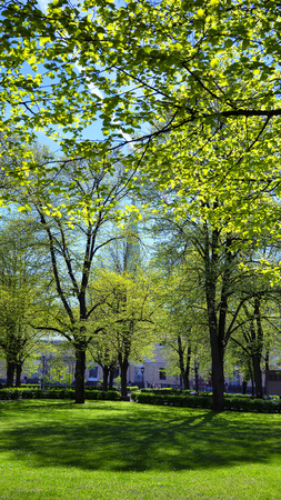 Green grassy lawn in the spring park of Riga on a sunny day