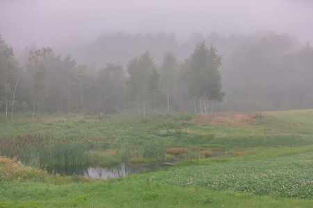 Morning mist on a green field with a pond by the forest in summer Фото со стока