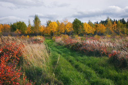 Meadow with green grass with tall red shrubs against the background of yellow trees in autumn