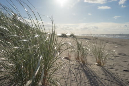 The sun in the blue sky over the Baltic sand dunes through green grass