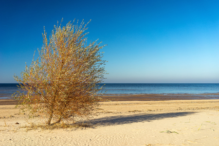 A tree with a shadow on a sandy beach against the horizon on a sunny autumn day