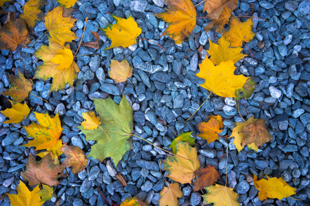 Colorful autumn leaves lie on the stones in the soft daylight