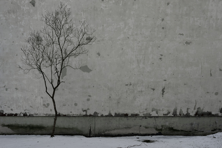 Silhouette of a tree without leaves against the background of a prefabricated house with a painted wall and the first snow of November Stock Photo