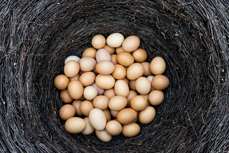 Yellow fresh chicken eggs in a nest of dry bushes 免版税图像