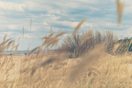 Walk on the beach of the Baltic Sea in the early spring on the sandy yellow dunes on a sunny day