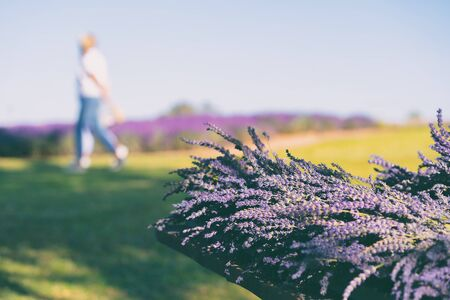 People on a sunny day are walking on the field on the background of lavender flowers Stock fotó