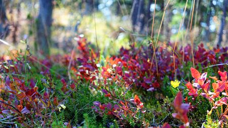 Plants in the forest among the trees in bright colors on a summer sunny day Фото со стока