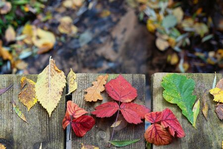 Bright autumn leaves in the forest