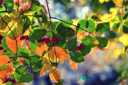 Bright autumn leaves of trees and bushes in a city park on a sunny day